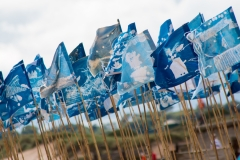 Blue Flag, Blyth Beach - photo by Jason Thompson, Sound Ideas