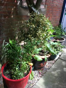 Some of the plants and pots donated to the Headway Arts Sensory Garden Opening
